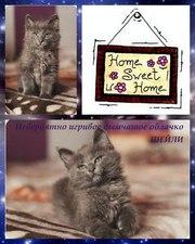 Чудо-котька Шейли ищет дом!