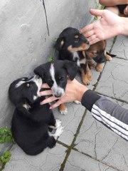 ОЧЕНЬ СРОЧНО!!!Нужен дом щенкам (4 девочки),  найдены в коробк